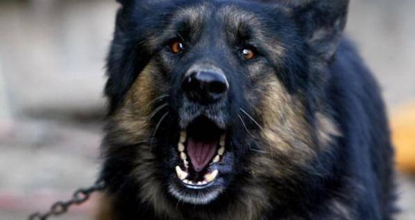 """محكمة كرواتية """"تمنع"""" كلبا من النباح ليلا"""