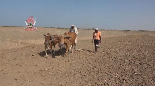 مزارعون يعانقون حقولهم بعد تطهيرها من &#34فخاخ الموت&#34 الحوثية