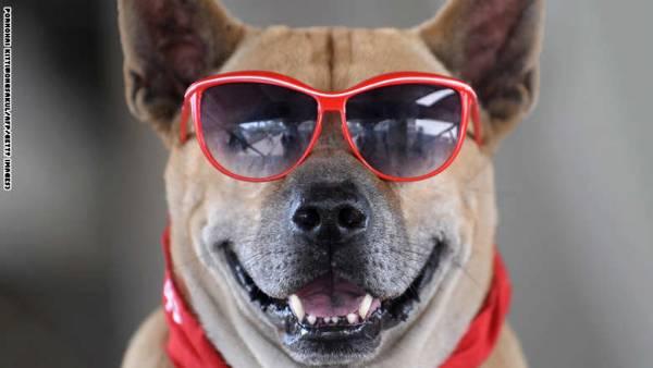 وظيفة شاغرة في موقع &#34Vine&#34 .. مطلوب كلب ظريف ومتحمس