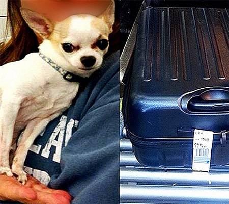 استنفار في مطار بنيويورك بسبب كلب