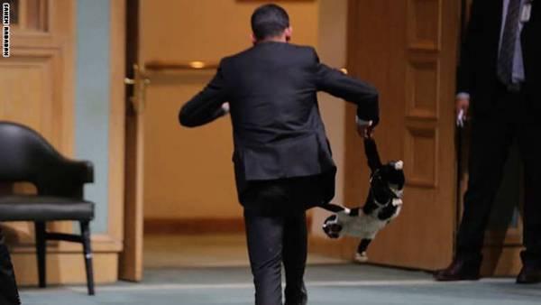 الأردن.. مطاردة &#34قط&#34 اقتحم مجلس النواب تثير سخرية نشطاء وسخط حماة الحيوان