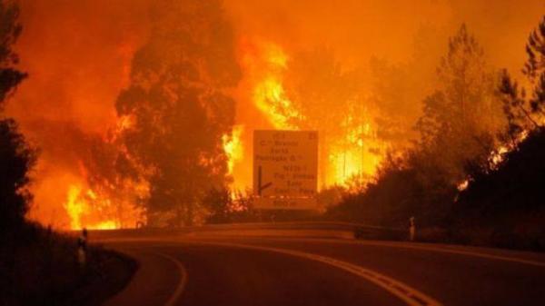 البرتغال: 62 قتيلا في أسوأ كارثة حريق غابات