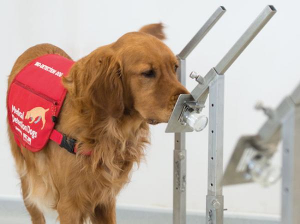 العلماء يكتشفون تفاصيل أدق عن سبب حاسة الشم القوية لدى الكلاب