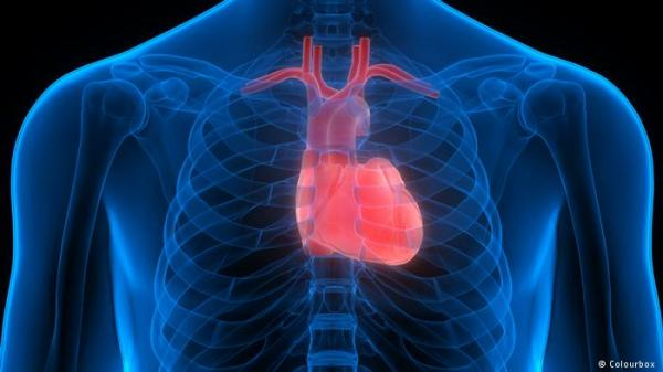 باحثون ينجحون في ترقيع أنسجة القلب من دون جراحة