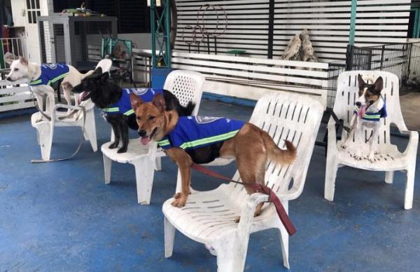 &#34سترات ذكية&#34 تحول الكلاب الضالة في تايلاند إلى حراس للشوارع