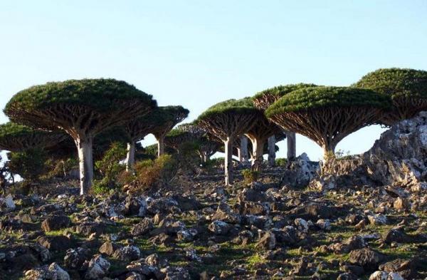الحكومة اليمنية تنجح في ابقاء جزيرة سقطرى ضمن مواقع التراث العالمي