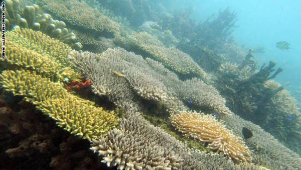 مختبر لاستزراع &#34الشعاب المرجانية&#34 بوسط صحراء النقب للمساعدة في &#34إنبات العظام البشرية&#34