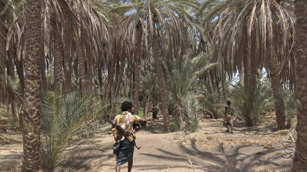 فيديو- &#34حراس الجمهورية&#34 تمشّط مزارع النخيل أعلى وادي الجاح في بيت الفقيه