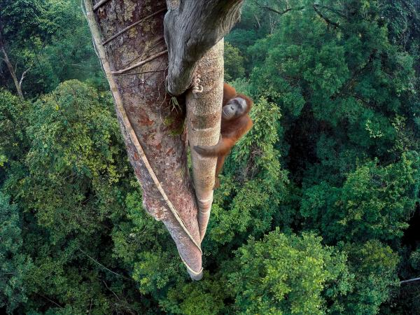 أجمل الصور الفائزة بمسابقة &#34مصور الحياة البرية 2016&#34