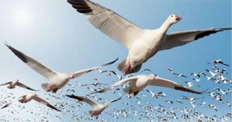 أسراب من الطيور المهاجرة تحط في عدن جنوب اليمن