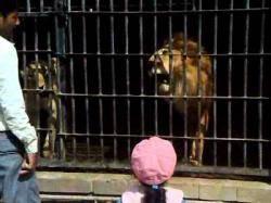 وفاة 3 حيوانات نادرة بحديقة &#34إب&#34 بسبب الإهمال وسوء التغدية