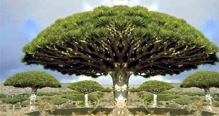 2300 سائح من 70 بلداً في العالم زاروا سقطرى خلال العام 2013