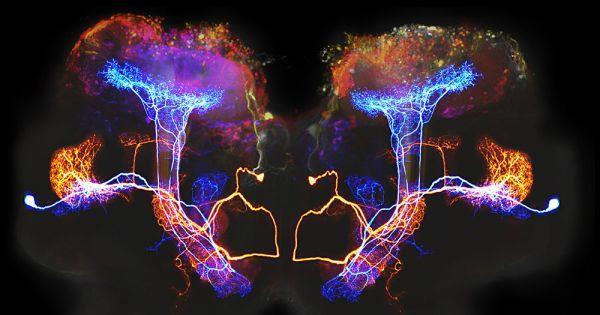 دراسة جديدة تربط الوعي البشري بقانون يضبط الكون