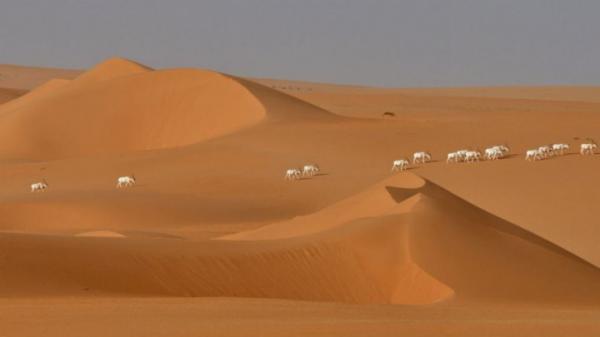 النيجر: الجيش ينقذ 24 مهاجرا في قلب الصحراء ومخاوف من مقتل العشرات