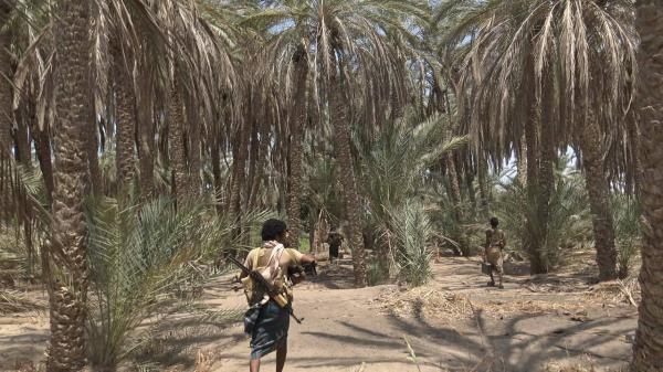 القوات المشتركة تكبد مليشيا الحوثي خسائر فادحة وتغنم أسلحة بهجوم عكسي جنوب الحديدة