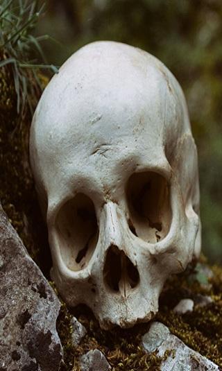 باحثون: جمجمة قديمة في بابوا غينيا الجديدة تخص أقدم ضحية معروف لتسونامي